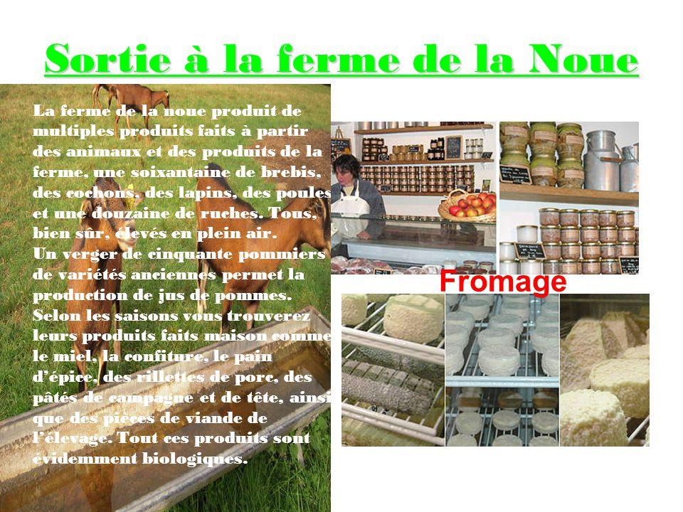 La Fromagerie : étape du moulage, Il y a plusieurs formes de moules pour donner des gouts différents aux fromages.