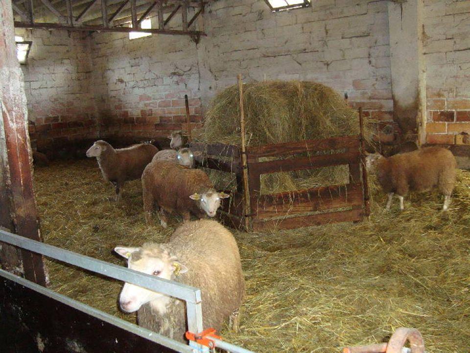 Explication de la traite des chèvres