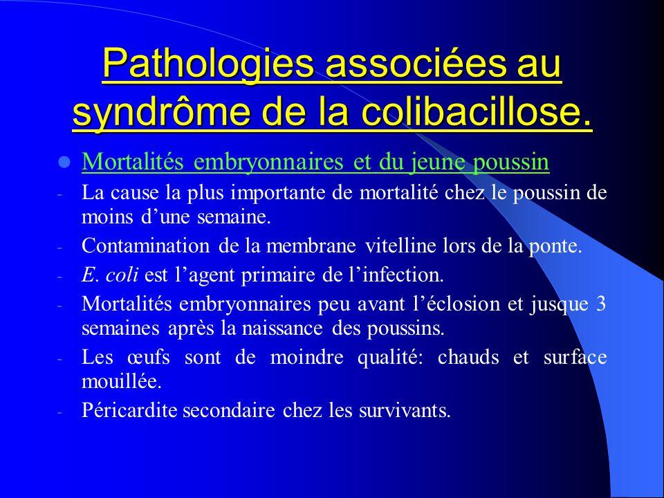 Pathologies associées au syndrôme de la colibacillose. Mortalités embryonnaires et du jeune poussin - La cause la plus importante de mortalité chez le