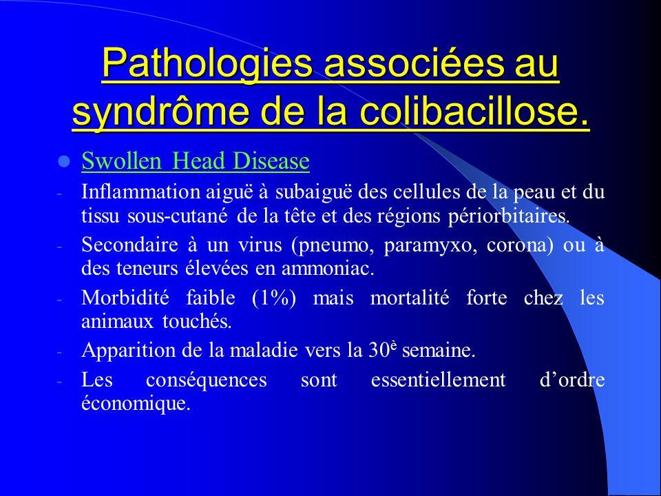 Pathologies associées au syndrôme de la colibacillose. Swollen Head Disease - Inflammation aiguë à subaiguë des cellules de la peau et du tissu sous-c