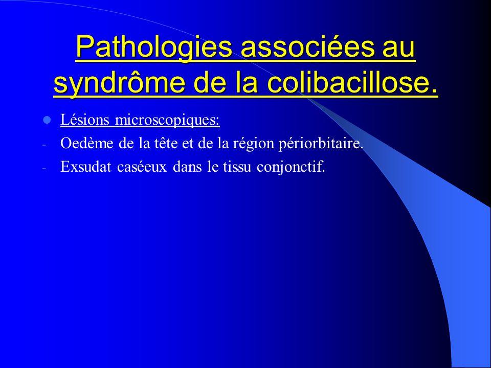 Pathologies associées au syndrôme de la colibacillose. Lésions microscopiques: - Oedème de la tête et de la région périorbitaire. - Exsudat caséeux da