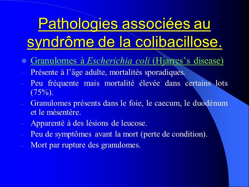 Pathologies associées au syndrôme de la colibacillose. Granulomes à Escherichia coli (Hjarress disease) - Présente à lâge adulte, mortalités sporadiqu