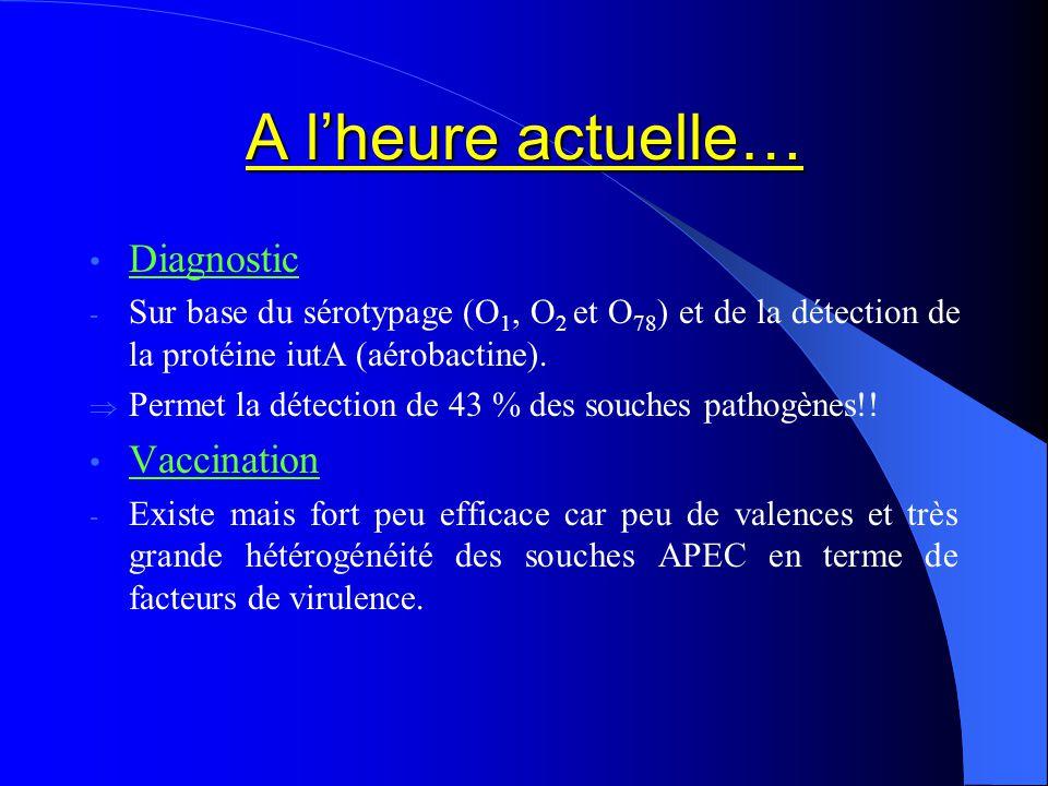 A lheure actuelle… Diagnostic - Sur base du sérotypage (O 1, O 2 et O 78 ) et de la détection de la protéine iutA (aérobactine). Permet la détection d