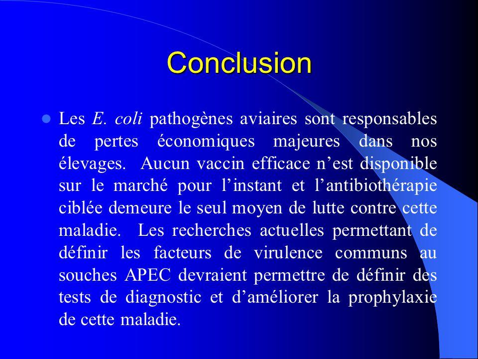 Conclusion Les E. coli pathogènes aviaires sont responsables de pertes économiques majeures dans nos élevages. Aucun vaccin efficace nest disponible s