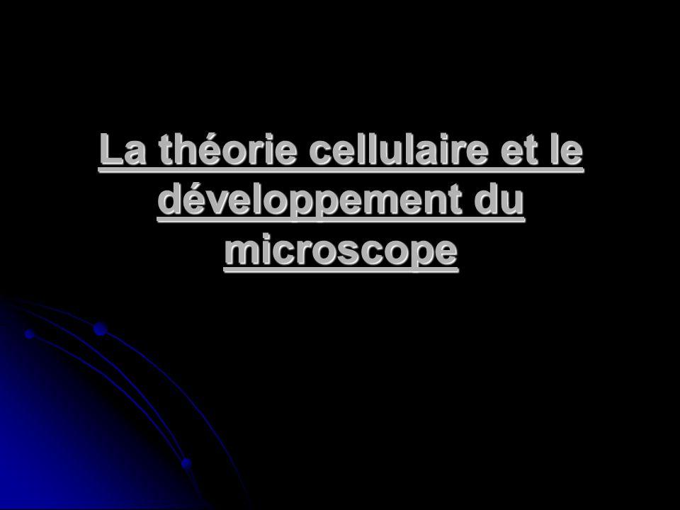 Image – Cellule – Microscope composé