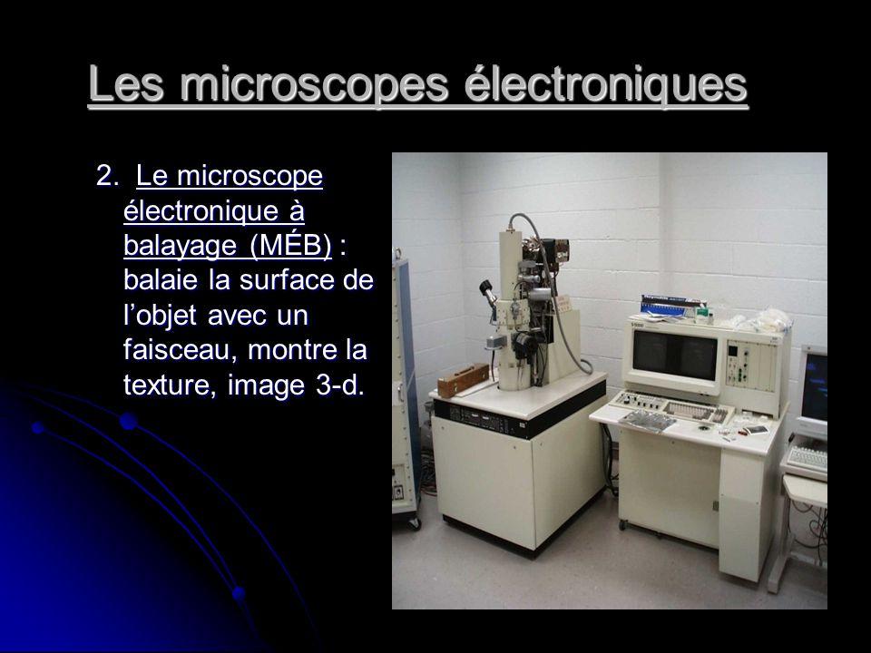 Les microscopes électroniques 2. Le microscope électronique à balayage (MÉB) : balaie la surface de lobjet avec un faisceau, montre la texture, image