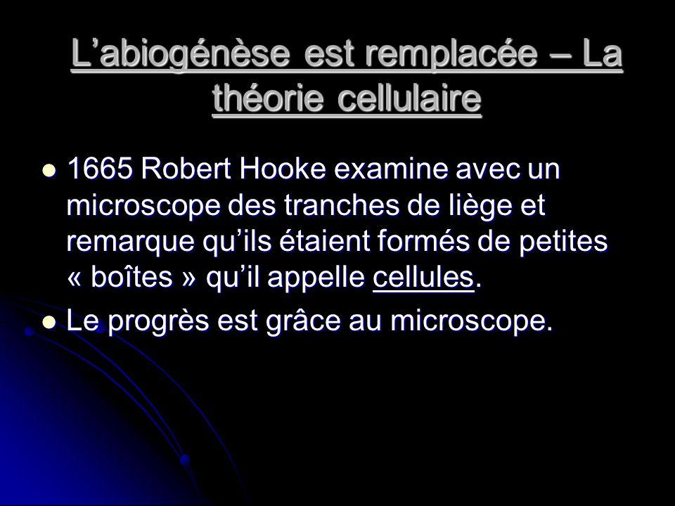 Labiogénèse est remplacée – La théorie cellulaire 1665 Robert Hooke examine avec un microscope des tranches de liège et remarque quils étaient formés