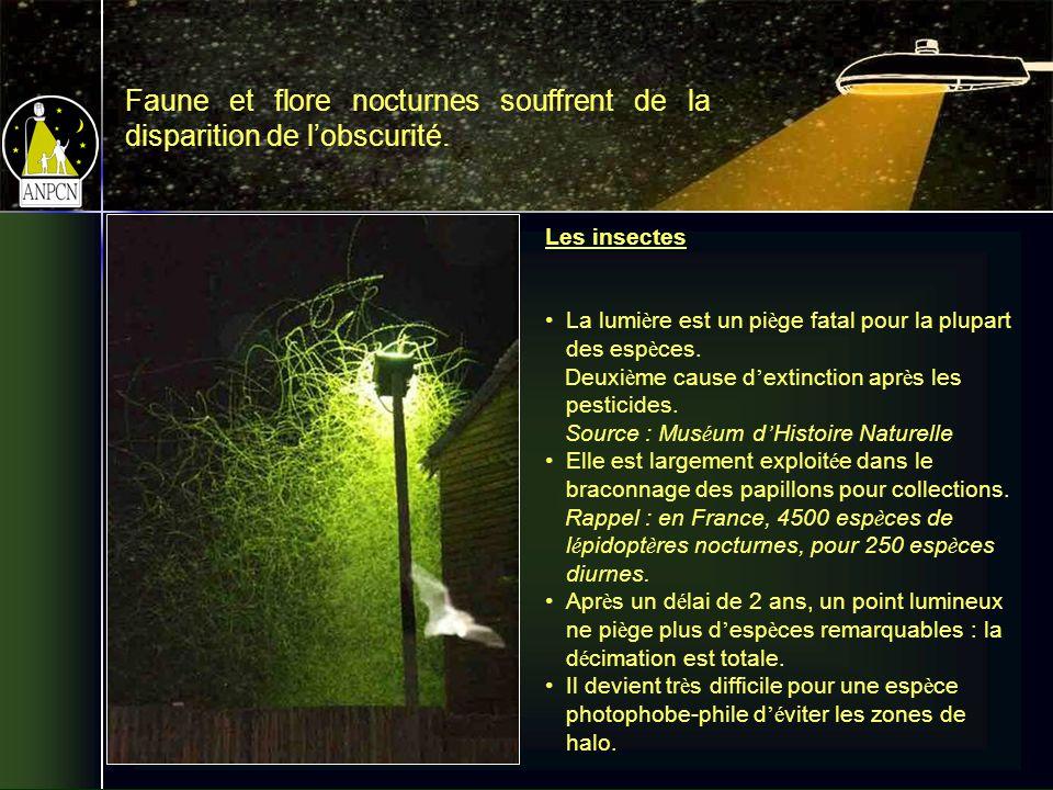 Les insectes La lumi è re est un pi è ge fatal pour la plupart des esp è ces.