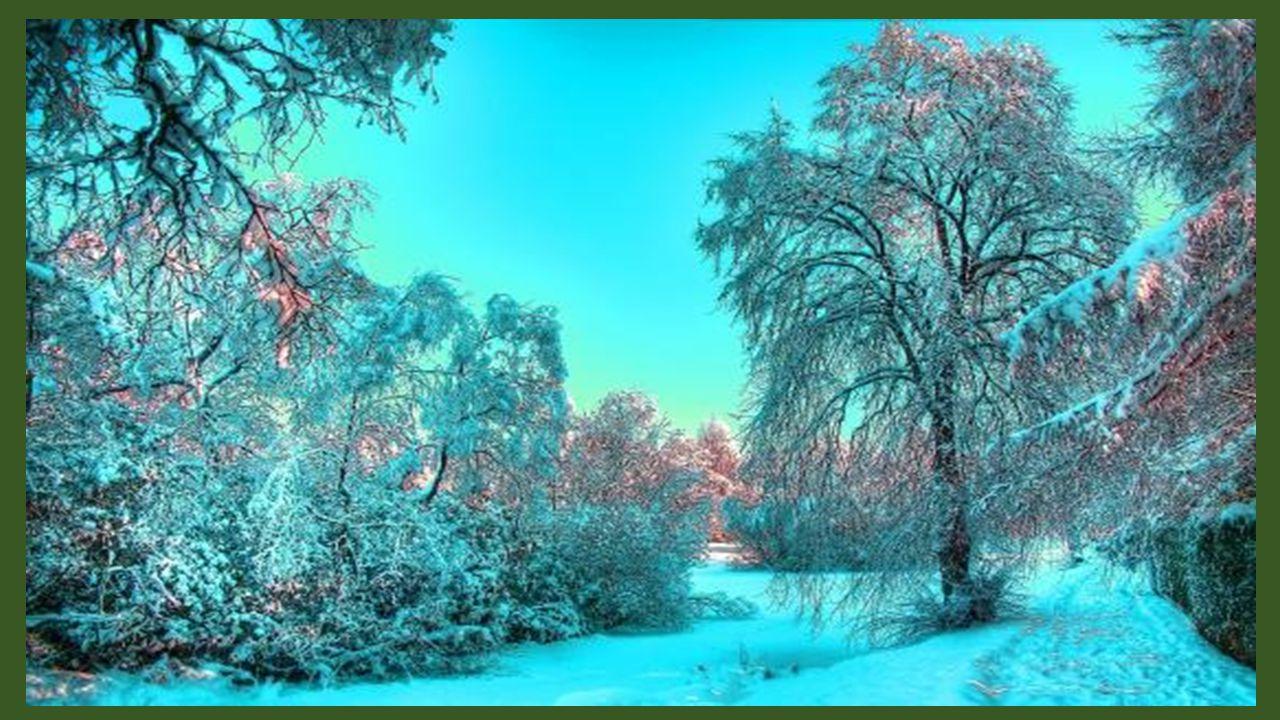 Les oiseaux se cachent timides Et vont dormir sous les arceaux Même sils la savent candide, Si jolie dans son blanc manteau.