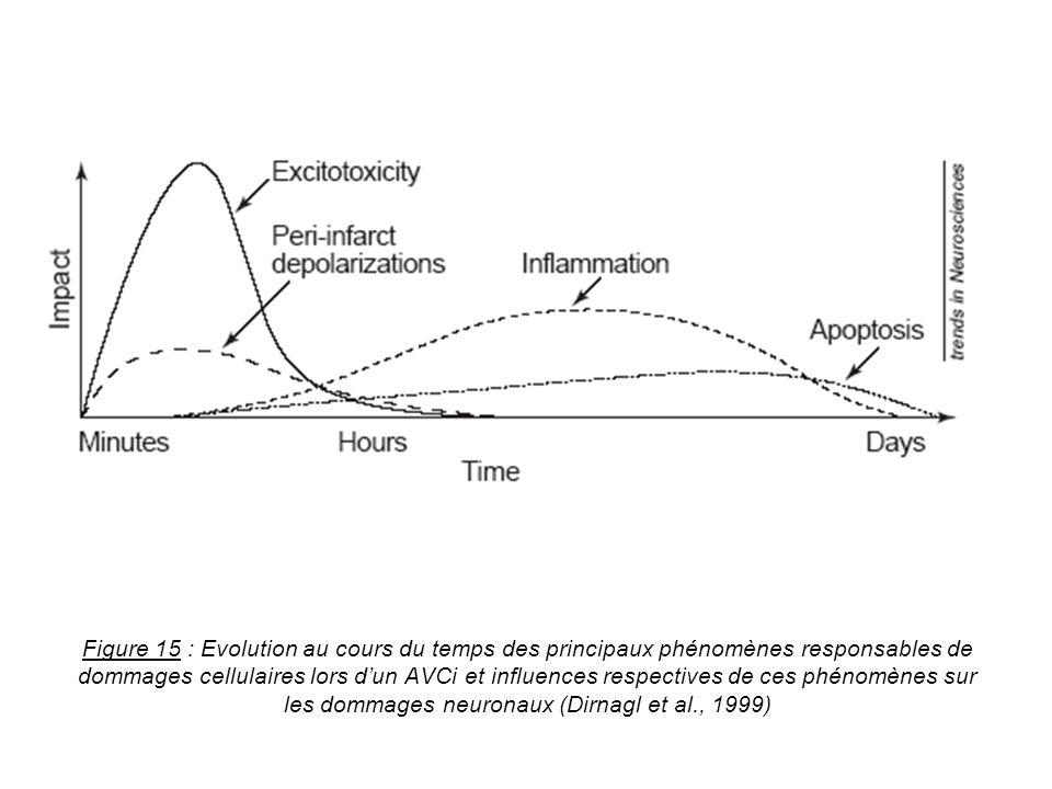 Figure 15 : Evolution au cours du temps des principaux phénomènes responsables de dommages cellulaires lors dun AVCi et influences respectives de ces