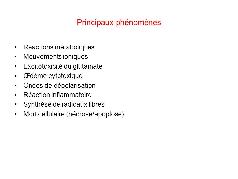 Principaux phénomènes Réactions métaboliques Mouvements ioniques Excitotoxicité du glutamate Œdème cytotoxique Ondes de dépolarisation Réaction inflam