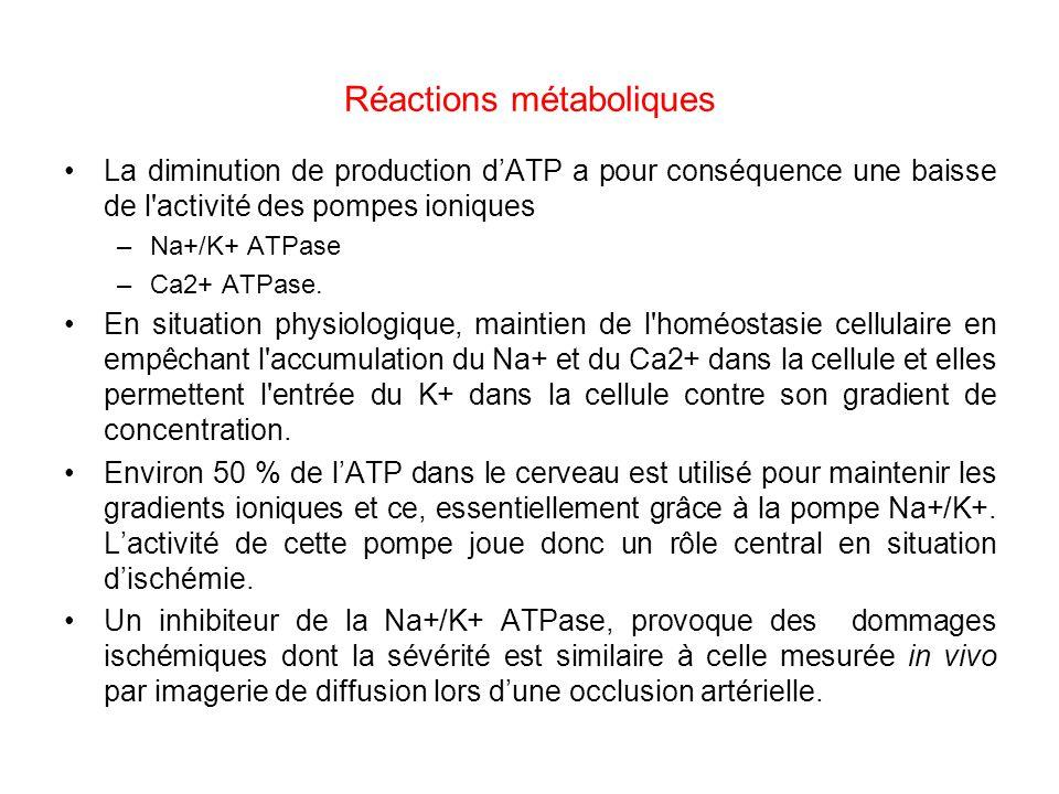 Réactions métaboliques La diminution de production dATP a pour conséquence une baisse de l'activité des pompes ioniques –Na+/K+ ATPase –Ca2+ ATPase. E