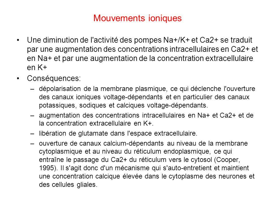 Mouvements ioniques Une diminution de l'activité des pompes Na+/K+ et Ca2+ se traduit par une augmentation des concentrations intracellulaires en Ca2+