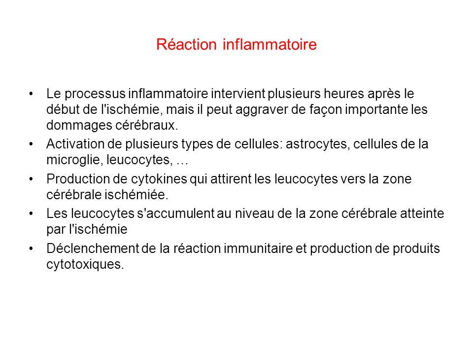 Réaction inflammatoire Le processus inflammatoire intervient plusieurs heures après le début de l'ischémie, mais il peut aggraver de façon importante