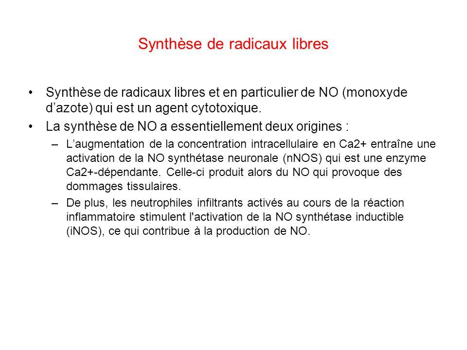 Synthèse de radicaux libres Synthèse de radicaux libres et en particulier de NO (monoxyde dazote) qui est un agent cytotoxique. La synthèse de NO a es