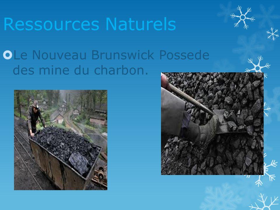 Ressources Naturels Le Nouveau Brunswick Possede des mine du charbon.