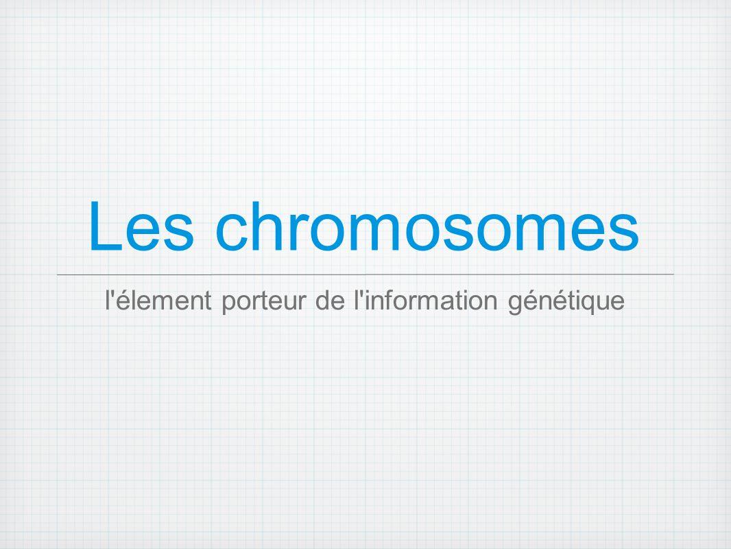 Les Chromosomes Ils sont formés d une longue molécule d ADN, associée à des protéines Les chromosomes contiennent les gènes et permettent leur distribution égale dans les deux cellules filles lors de la division cellulaire