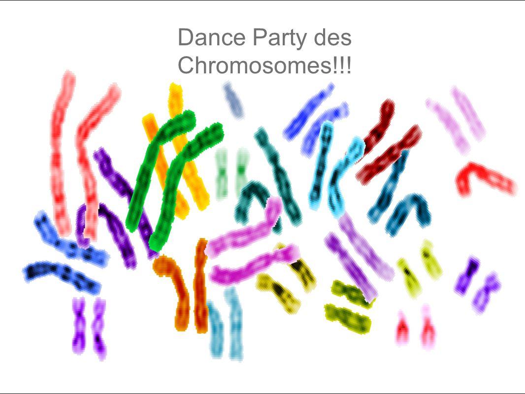 Dance Party des Chromosomes!!!