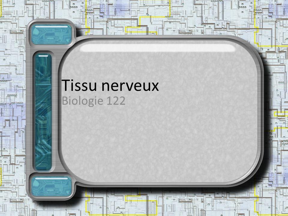 Tissu nerveux Biologie 122