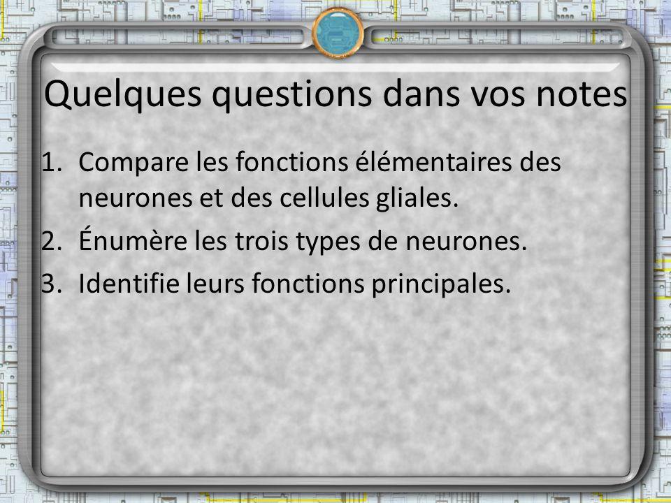 Quelques questions dans vos notes 1.Compare les fonctions élémentaires des neurones et des cellules gliales. 2.Énumère les trois types de neurones. 3.