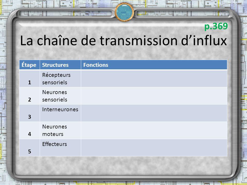 La chaîne de transmission dinflux ÉtapeStructuresFonctions 1 Récepteurs sensoriels 2 Neurones sensoriels 3 Interneurones 4 Neurones moteurs 5 Effecteu