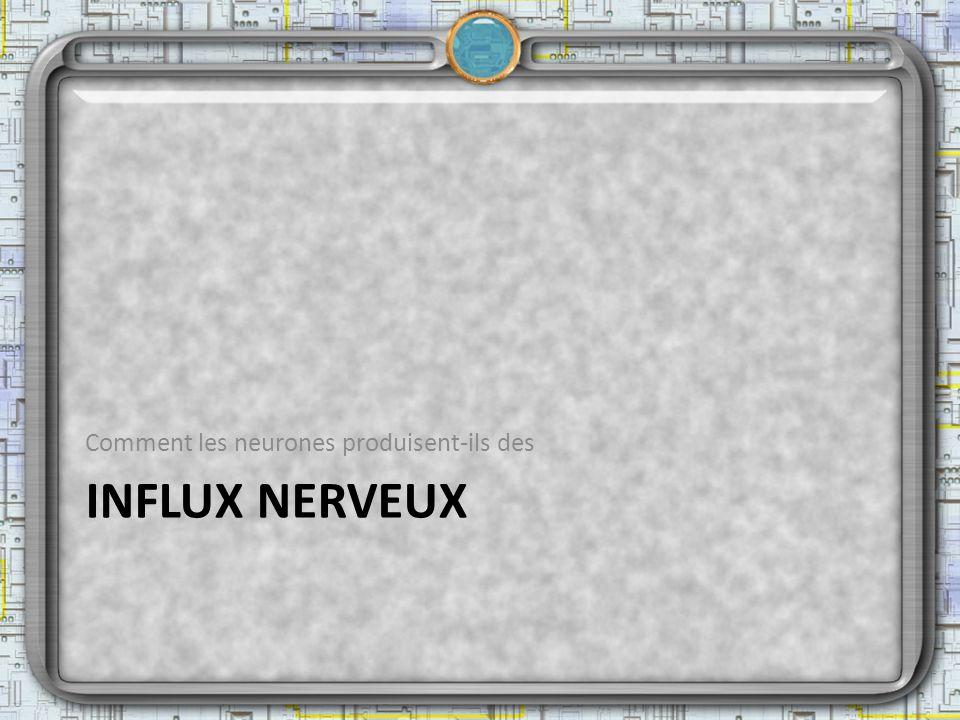 INFLUX NERVEUX Comment les neurones produisent-ils des
