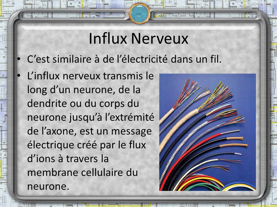 Influx Nerveux Cest similaire à de lélectricité dans un fil. Linflux nerveux transmis le long dun neurone, de la dendrite ou du corps du neurone jusqu