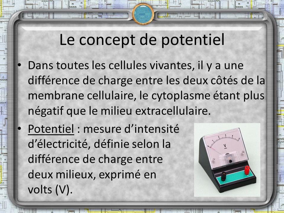 Le concept de potentiel Dans toutes les cellules vivantes, il y a une différence de charge entre les deux côtés de la membrane cellulaire, le cytoplas