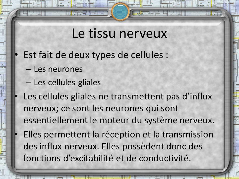 Le tissu nerveux Est fait de deux types de cellules : – Les neurones – Les cellules gliales Les cellules gliales ne transmettent pas dinflux nerveux;