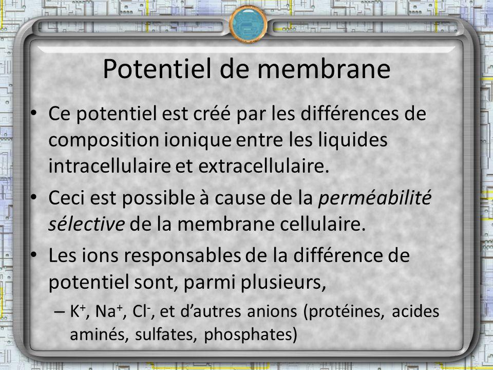 Potentiel de membrane Ce potentiel est créé par les différences de composition ionique entre les liquides intracellulaire et extracellulaire. Ceci est