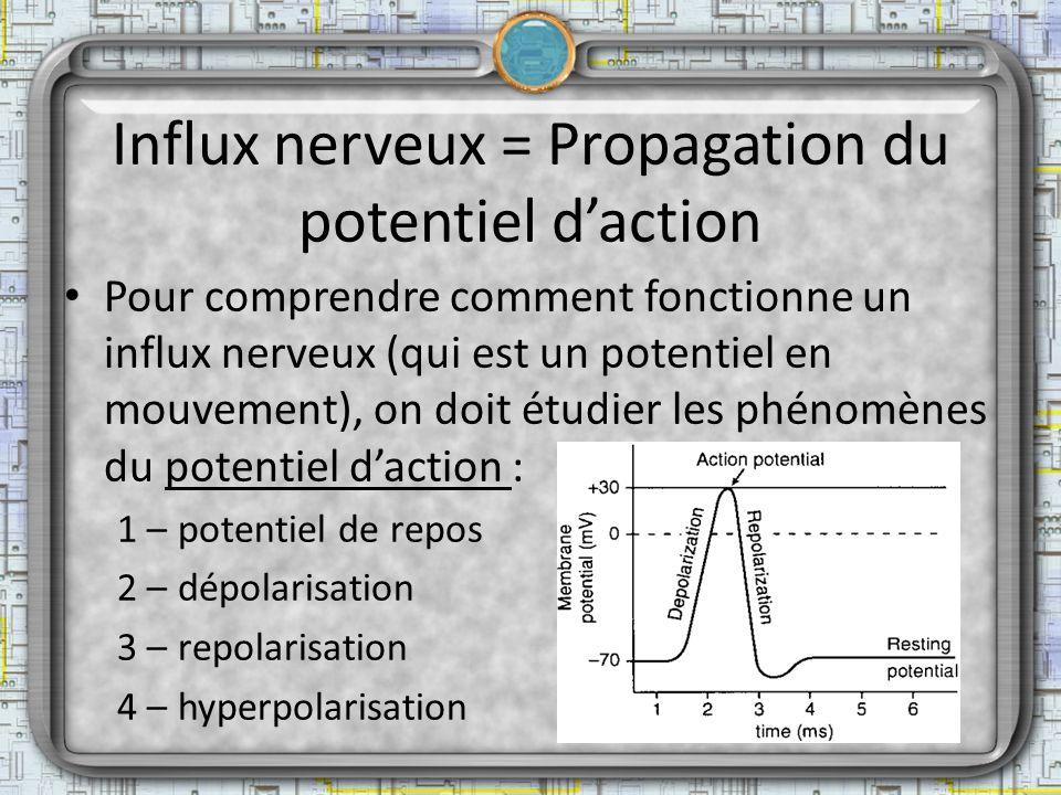 Influx nerveux = Propagation du potentiel daction Pour comprendre comment fonctionne un influx nerveux (qui est un potentiel en mouvement), on doit ét