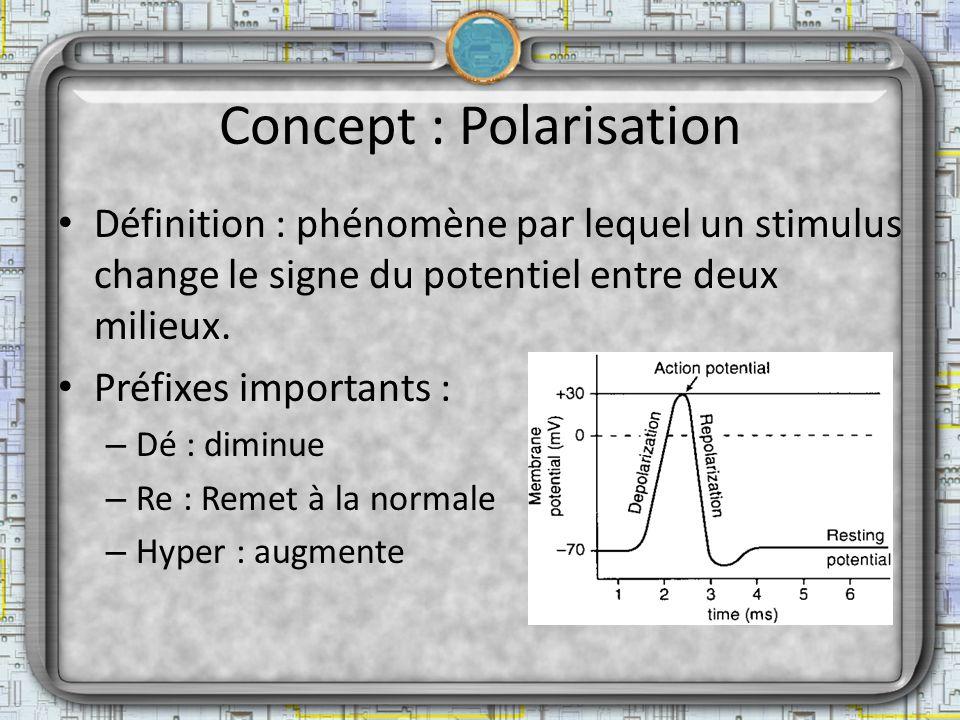Concept : Polarisation Définition : phénomène par lequel un stimulus change le signe du potentiel entre deux milieux. Préfixes importants : – Dé : dim