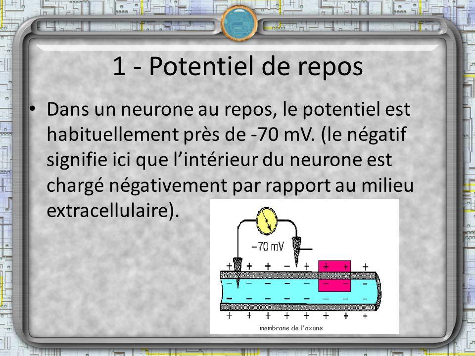1 - Potentiel de repos Dans un neurone au repos, le potentiel est habituellement près de -70 mV. (le négatif signifie ici que lintérieur du neurone es