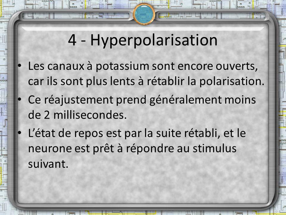 4 - Hyperpolarisation Les canaux à potassium sont encore ouverts, car ils sont plus lents à rétablir la polarisation. Ce réajustement prend généraleme