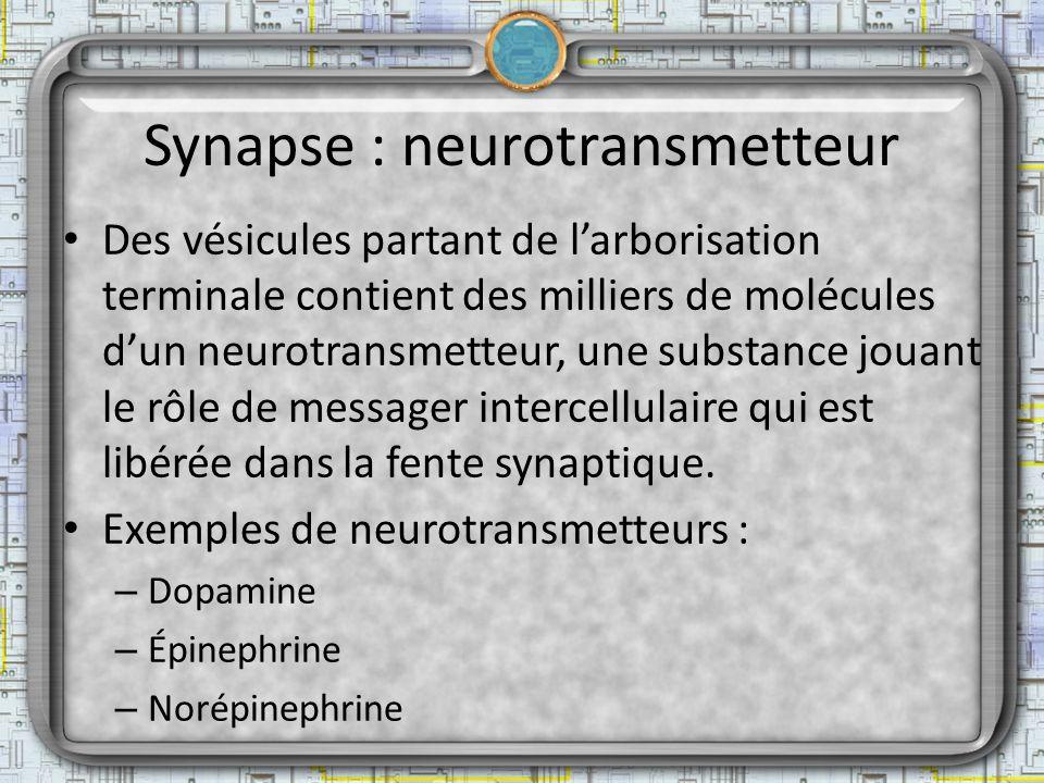 Synapse : neurotransmetteur Des vésicules partant de larborisation terminale contient des milliers de molécules dun neurotransmetteur, une substance j