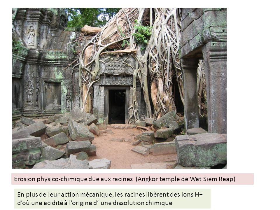 Erosion physico-chimique due aux racines (Angkor temple de Wat Siem Reap) En plus de leur action mécanique, les racines libèrent des ions H+ doù une a
