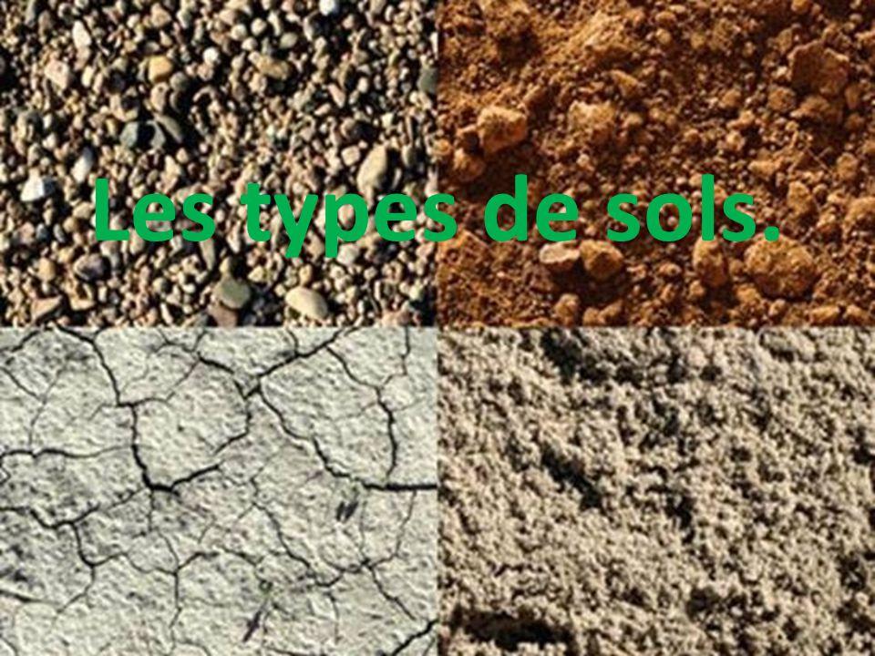 Sol sableux Ce type de sol est généralement composé de grains de sable.