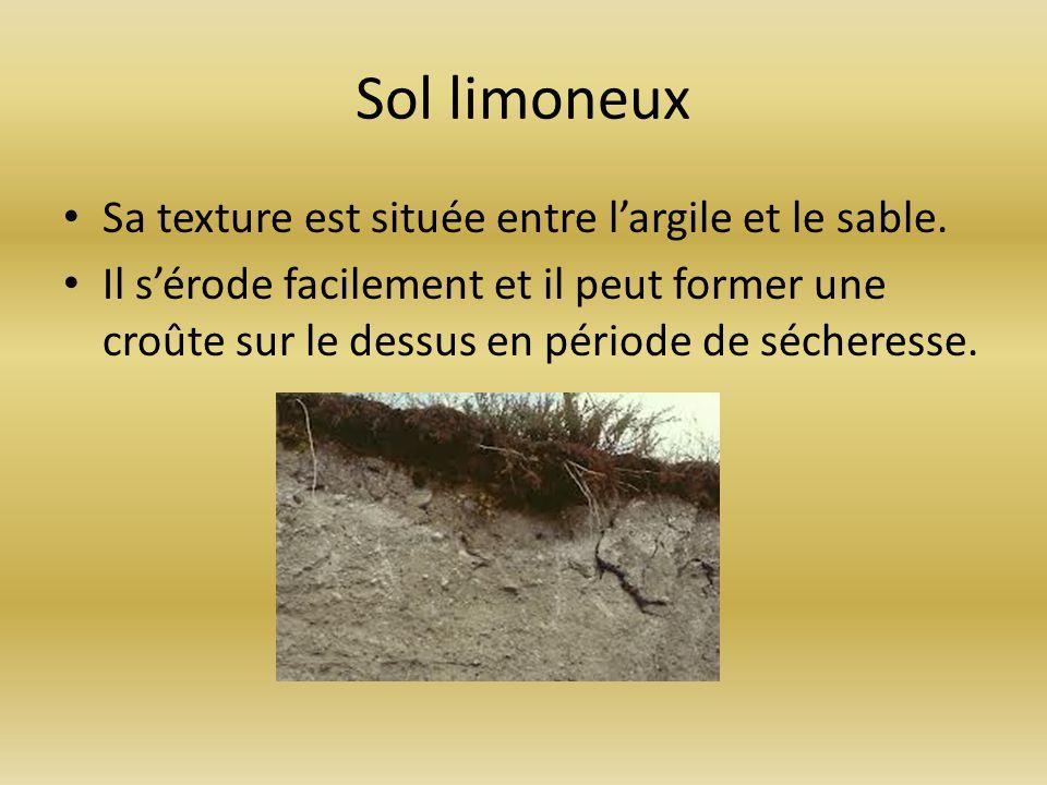 Sol limoneux Sa texture est située entre largile et le sable. Il sérode facilement et il peut former une croûte sur le dessus en période de sécheresse