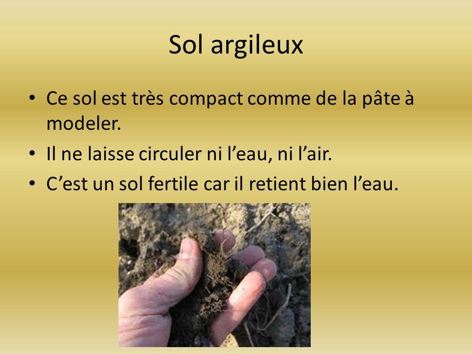 Sol argileux Ce sol est très compact comme de la pâte à modeler. Il ne laisse circuler ni leau, ni lair. Cest un sol fertile car il retient bien leau.