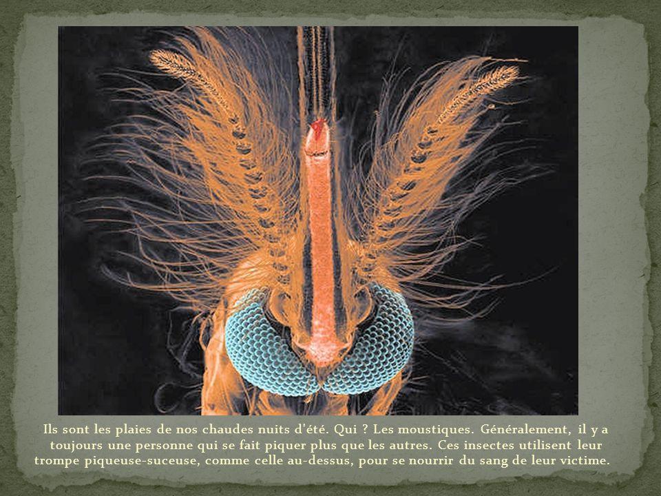 Ci-dessus, nous observons un acarien parasite des feuillages, à ne pas confondre avec celui des poussières responsable de nombreuses allergies chez l'
