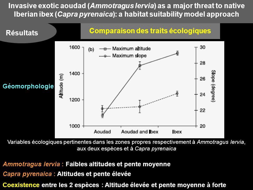 Invasive exotic aoudad (Ammotragus lervia) as a major threat to native Iberian ibex (Capra pyrenaica): a habitat suitability model approach Résultats Comparaison des traits écologiques Variables écologiques pertinentes dans les zones propres respectivement à Ammotragus lervia, aux deux espèces et à Capra pyrenaica Ammotragus lervia : Faibles altitudes et pente moyenne Capra pyrenaica : Altitudes et pente élevée Coexistence entre les 2 espèces : Altitude élevée et pente moyenne à forte Géomorphologie