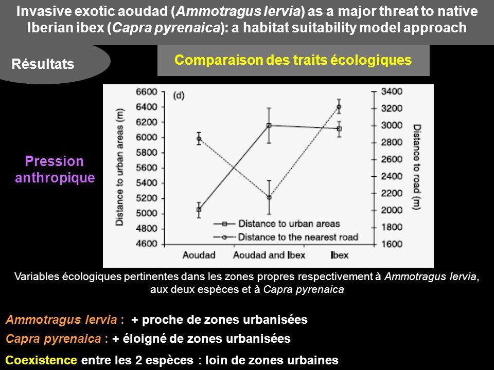 Invasive exotic aoudad (Ammotragus lervia) as a major threat to native Iberian ibex (Capra pyrenaica): a habitat suitability model approach Résultats Variables écologiques pertinentes dans les zones propres respectivement à Ammotragus lervia, aux deux espèces et à Capra pyrenaica Ammotragus lervia : + proche de zones urbanisées Capra pyrenaica : + éloigné de zones urbanisées Coexistence entre les 2 espèces : loin de zones urbaines Comparaison des traits écologiques Pression anthropique