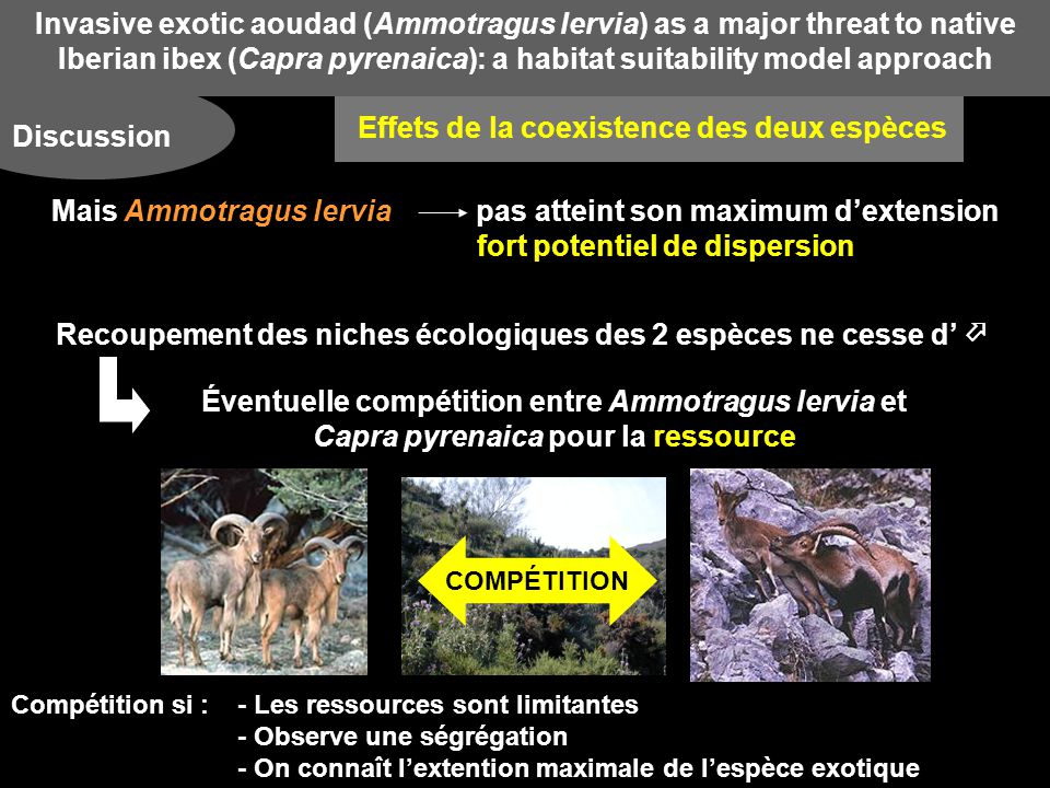 Invasive exotic aoudad (Ammotragus lervia) as a major threat to native Iberian ibex (Capra pyrenaica): a habitat suitability model approach Discussion