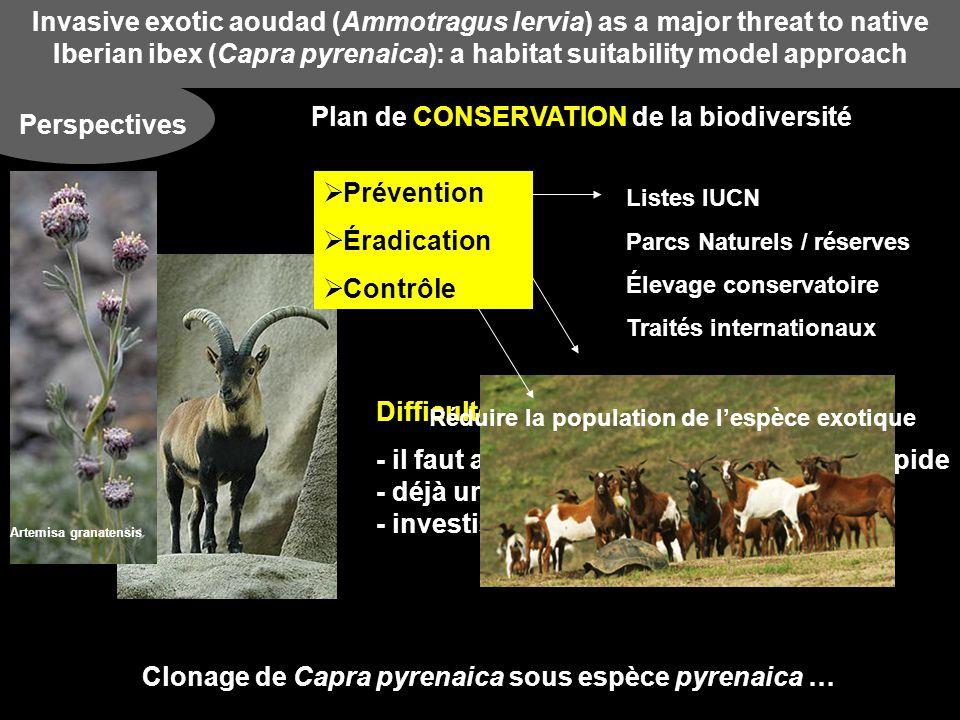 Invasive exotic aoudad (Ammotragus lervia) as a major threat to native Iberian ibex (Capra pyrenaica): a habitat suitability model approach Perspectives Plan de CONSERVATION de la biodiversité Difficultés : - il faut agir vite car la colonisation est rapide - --- - déjà une grande surface colonisée - --- - investissements financiers colossaux Artemisa granatensis Listes IUCN Parcs Naturels / réserves Élevage conservatoire Traités internationaux Clonage de Capra pyrenaica sous espèce pyrenaica … Réduire la population de lespèce exotique Prévention Éradication Contrôle