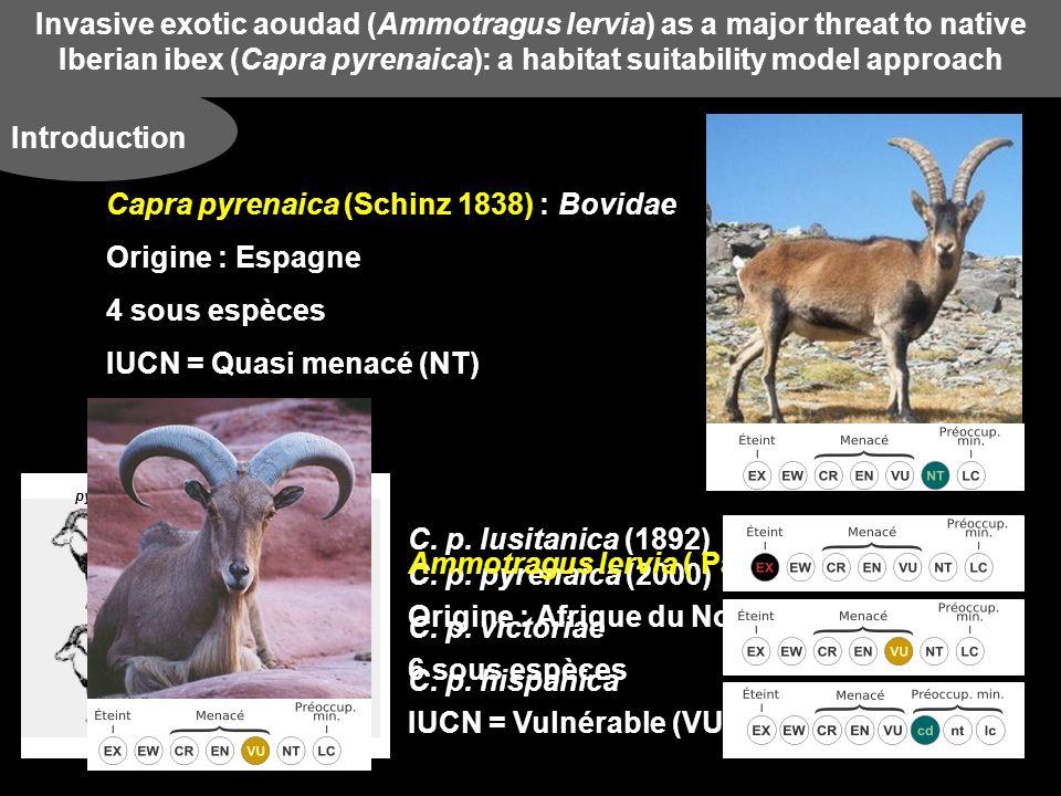 Invasive exotic aoudad (Ammotragus lervia) as a major threat to native Iberian ibex (Capra pyrenaica): a habitat suitability model approach Résultats Habitat Suitability Modellig (HSM) Cartes prédictives des habitats respectifs à chaque espèces Ammotragus lervia et Capra pyrenaica + la zone est foncée + lhabitat est en adéquation avec lespèce Ammotragus lervia = large répartition Capra pyrenaica = réparation plus restreinte et localisée