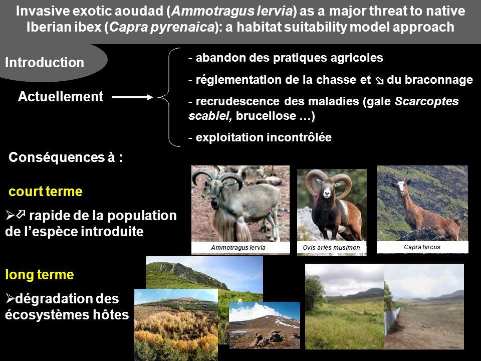 Invasive exotic aoudad (Ammotragus lervia) as a major threat to native Iberian ibex (Capra pyrenaica): a habitat suitability model approach Comparaison des Habitats entre Capra pyrenaica et Ammotragus lervia Comparer les exigences environnementales entre les 2 espèces Identifier les et les similarités Mettre en évidence une éventuelle compétition entre les 2 espèces Effets de lintroduction de Ammotragus lervia sur lespèce native Capra pyrenaica Invasive exotic aoudad (Ammotragus lervia) as a major threat to native Iberian ibex (Capra pyrenaica): a habitat suitability model approach Introduction
