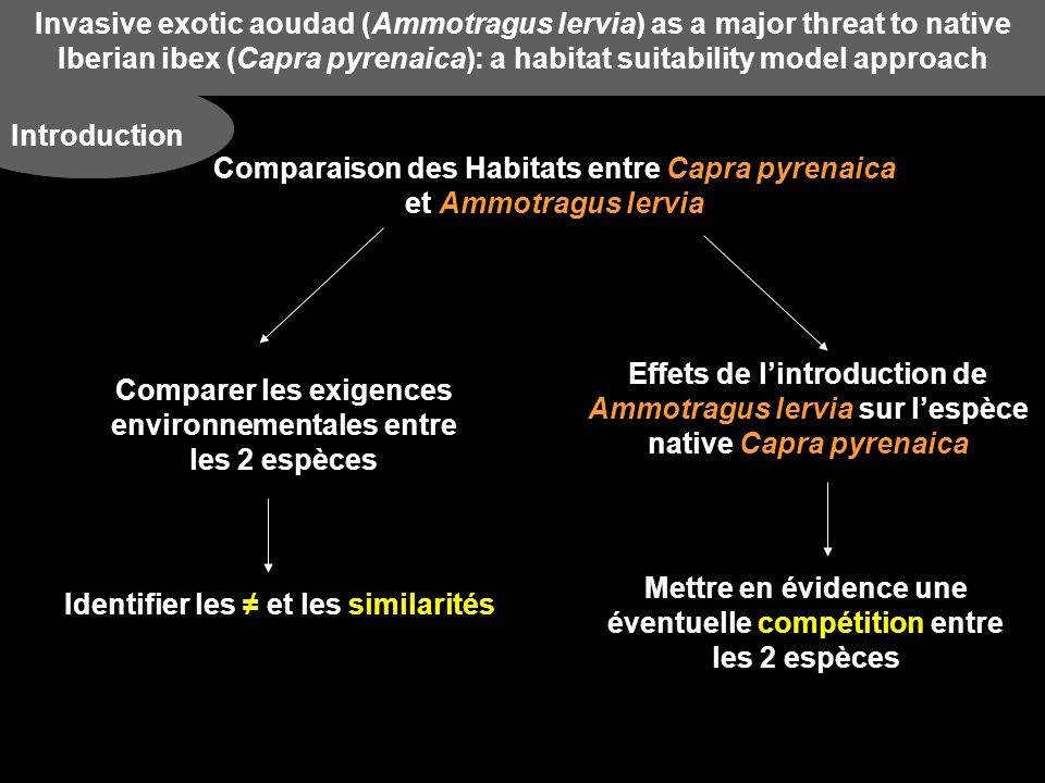 Invasive exotic aoudad (Ammotragus lervia) as a major threat to native Iberian ibex (Capra pyrenaica): a habitat suitability model approach Discussion Effets de la coexistence des deux espèces Recoupement des niches écologiques des 2 espèces ne cesse d Éventuelle compétition entre Ammotragus lervia et Capra pyrenaica pour la ressource Compétition si : - Les ressources sont limitantes - Observe une ségrégation - On connaît lextention maximale de lespèce exotique COMPÉTITION Mais Ammotragus lervia pas atteint son maximum dextension fort potentiel de dispersion