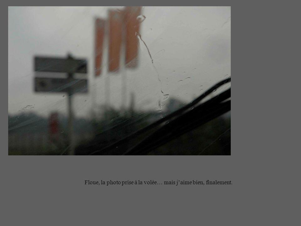 Floue, la photo prise à la volée… mais jaime bien, finalement.