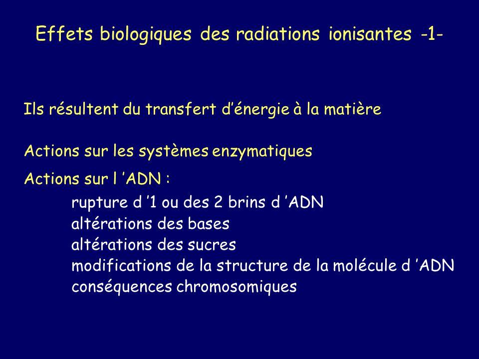 Effets biologiques des radiations ionisantes -1- Ils résultent du transfert dénergie à la matière Actions sur les systèmes enzymatiques Actions sur l