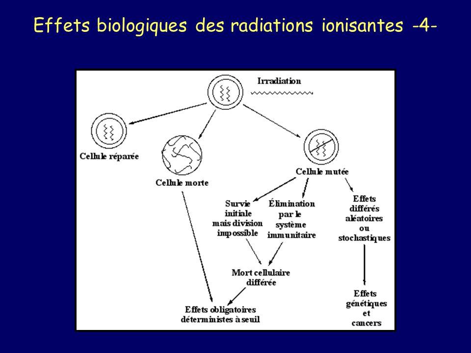 Utilisation en Médecine Nucléaire Isotope le plus souvent utilisé : Iode 131 gamma 360 KeV scintigraphie bêta moins thérapeutique T = 8 jours peut être couplé à un vecteur (molécule spécifique de lorgane à cibler)